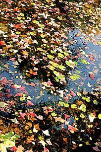秋天的落叶飘落水中
