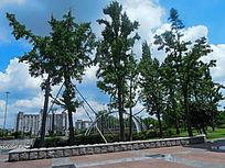 松江思贤公园的大树
