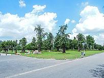 松江思贤公园的树木和绿草地