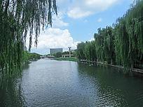 松江思贤公园河道和柳树