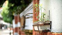老街道绿色室外盆栽植物