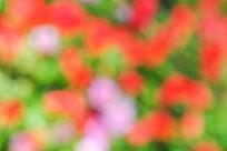 虚化的彩色花朵