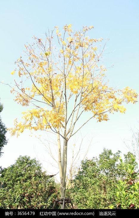 枯黄的树木图片,高清大图_树木枝叶素材