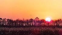 神仙沟畔火红的日出天空的飞鸟