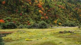 高原草甸旁多彩灌木丛