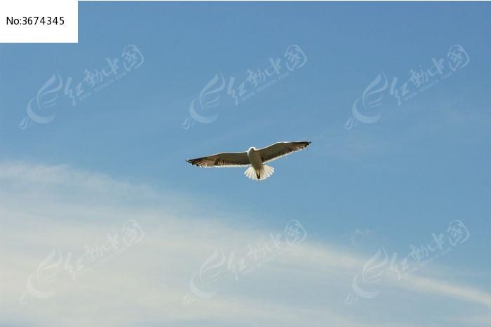 雄鹰m1911金属飞机头