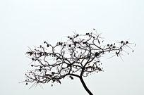 秋风吹落枯叶的树