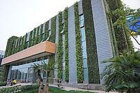 挂着植物装饰的建筑
