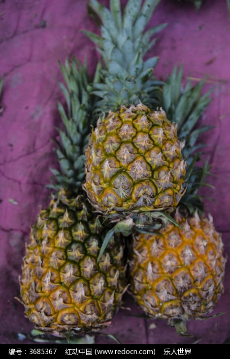 三个菠萝图片,高清大图_水果蔬菜素材