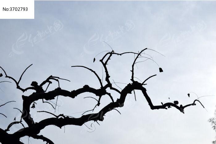 龙探爪树枝图片,高清大图_树木枝叶素材