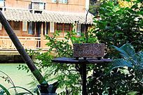 桌子上的盆栽植物