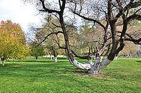 枯萎的树干