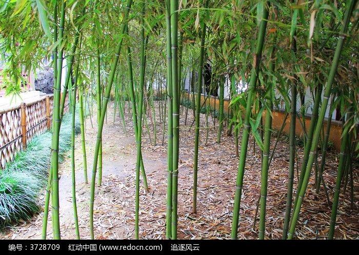 翠绿的竹子图片,高清大图