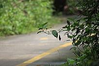 在绿色森林的马路