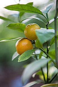 不同品种的普洱茶图片
