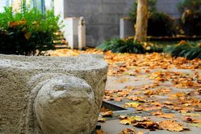 秋景 校园一角