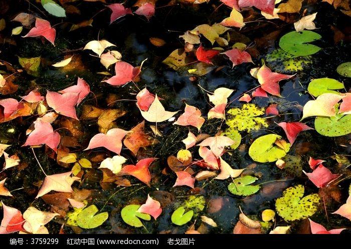 原创摄影图 动物植物 树木枝叶 掉落的秋叶  请您分享: 红动网提供