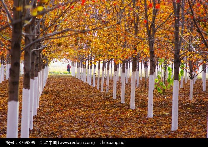 满地的落叶图片,高清大图_森林树林素材