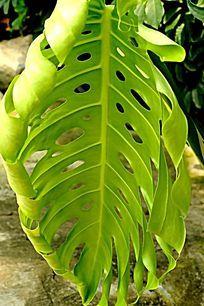 绿色树叶 镂空的树页面