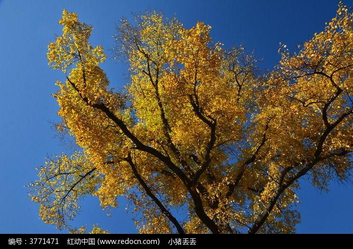 原创摄影图 动物植物 树木枝叶 秋天里的树叶  请您分享: 红动网提供