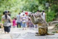 喝水的猴子