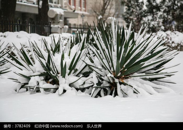 雪中的植物图片