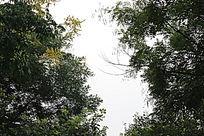 天空茂密的树叶
