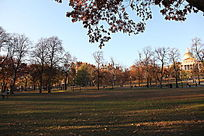 波士顿公园大面积的绿化草坪