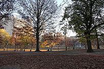 波士顿公园落叶草坪