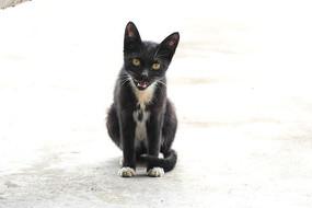 蹲地上喵喵叫的黑猫