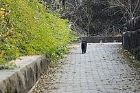 绿荫丛中行走的猫