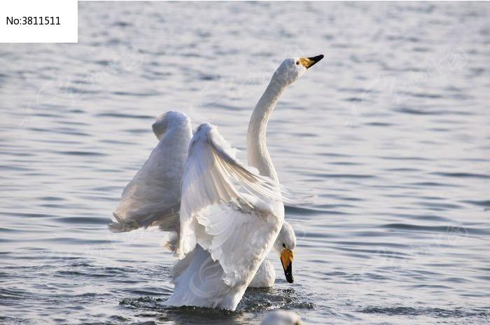 太极功夫扇白鹤亮翅