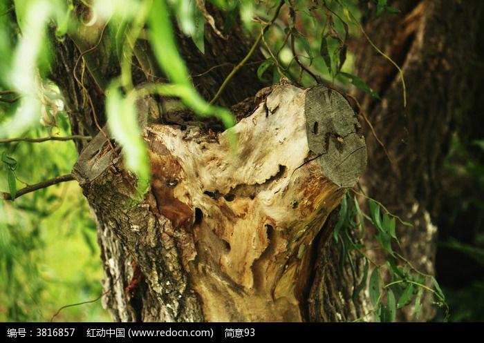 原创摄影图 动物植物 树木枝叶 树木  请您分享: 红动网提供树木枝叶