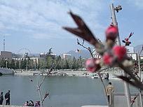 燕山城市湖泊风光和含苞待放花朵