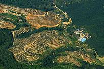 俯瞰滇南橡胶园山地
