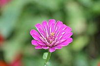 高清一朵鲜花儿特写