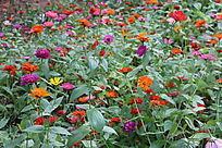花海花卉种植园