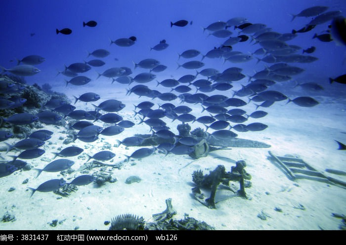 塞班水下 美军飞机 鱼群图片