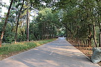 树林中阳光下的树林公路
