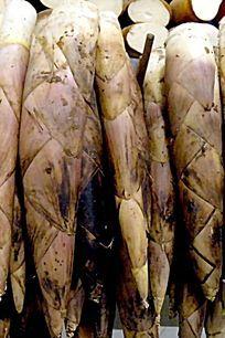蔬菜 新鲜竹笋