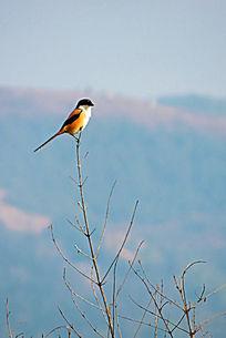 你的鸟儿会唱歌