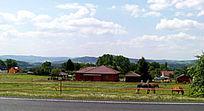 公路边上的养马场