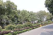公路园林图片