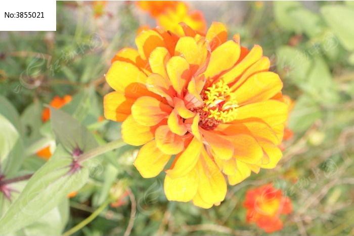 原创摄影图 动物植物 花卉花草 黄色鲜花