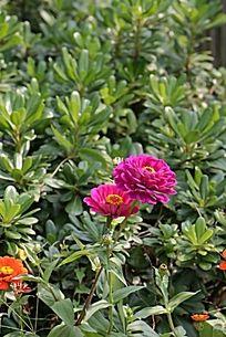 绿色花植物