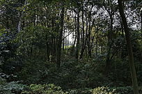 山林间植物风景