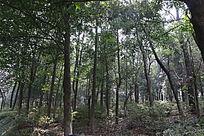 树林风景山