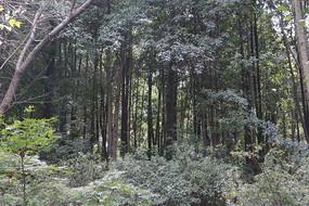 树林山林风景