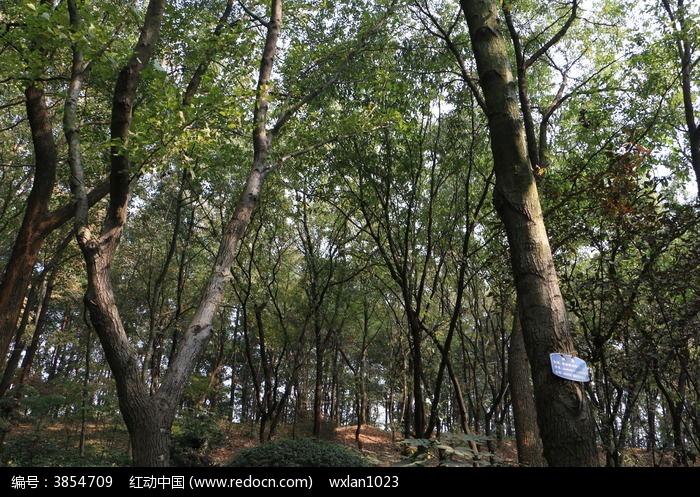 树林 树木图片,高清大图_森林树林素材