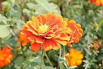 阳光明媚下花朵